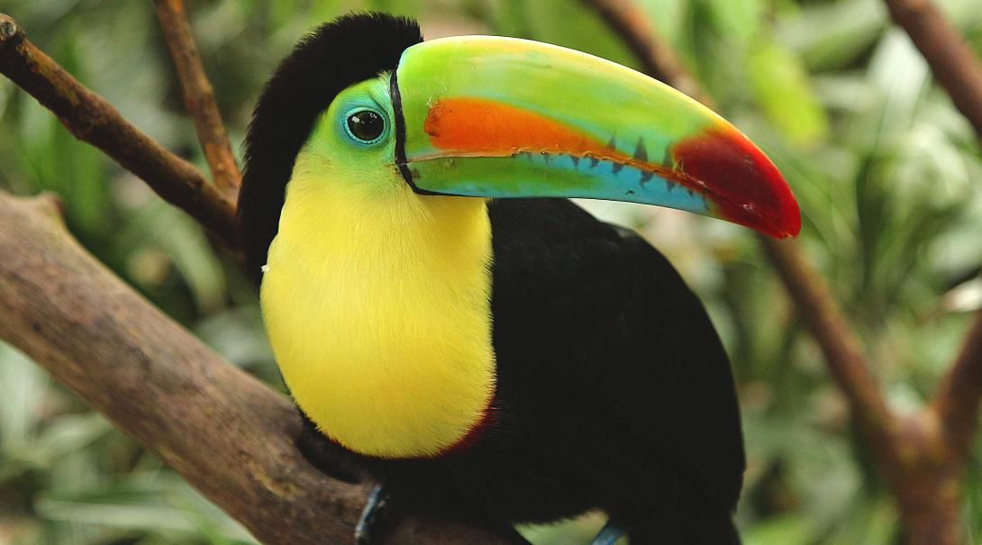 Schöner Einblick in Costa Rica.